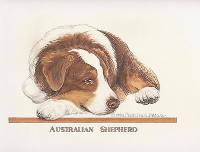 Australian Shepherd Red/White Original Art by Chris Lewis Brown - #579