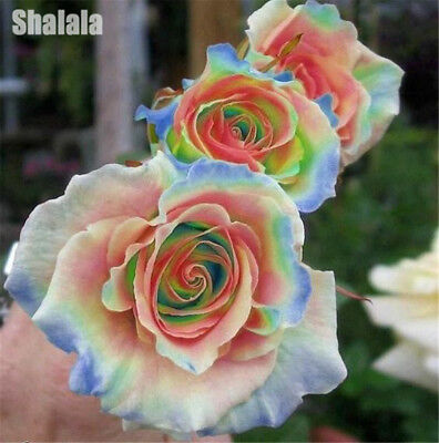 200pcs/Bag Rare Mixed Colors Rose Seeds Rainbow Rose Bonsai Flower Balcony Plant
