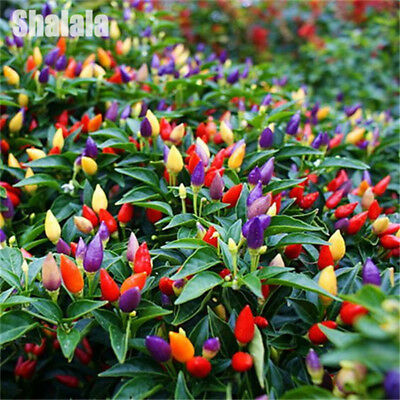200 Vegetable Pepper Seeds Sweet Chili Pepper Hot Chilli Bonsai Plants In Garden
