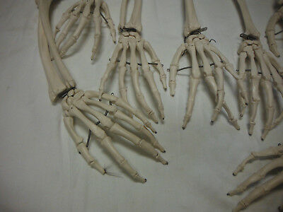 Skeleton ARM AND HAND LOT OF 7  For Learning & Teaching Anatomy Anatomical