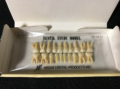 Kilgore International Nissin Typodont B4-309B teeth set Dental Model