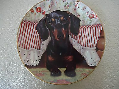 Peek A Boo Danbury Mint Dachshunds Dog Christopher Nick Collector Plate F5717
