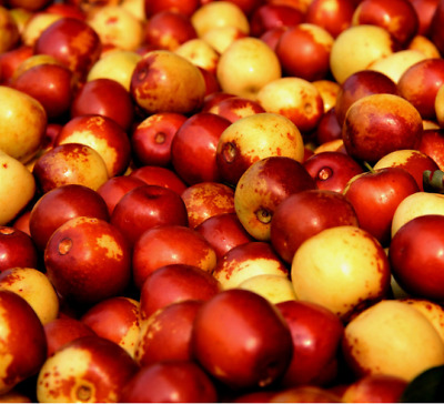 10pcs Red Jujube Seed Delicious Nutrition Fruit Exotic Bonsai Potted Plant Decor