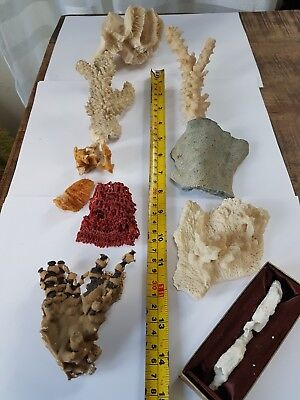 collection of vintage dried coral 9 types aquarium reef red blue branch tube sea
