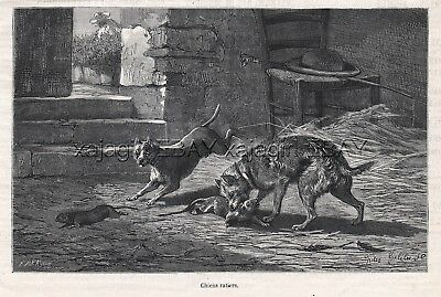Dog Rat Terrier & Cairn Terrier Hunting, 1870s Antique Engraving Print & Article