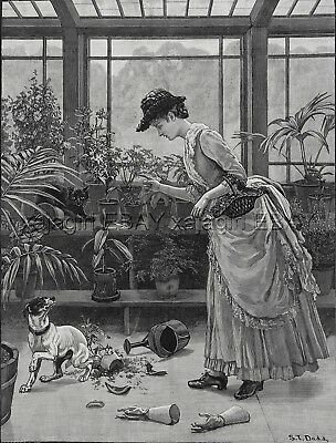 Dog Rat Terrier Naughty Digging in Greenhouse Beautiful Lady 1880s Antique Print