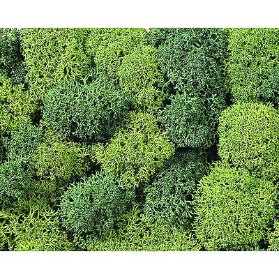 LICHEN MOSS - SUITS ALL SCALES by NOCH #8610 model train scenery