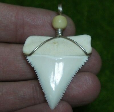 Manual winding contracted shark tooth great white shark teeth pendant