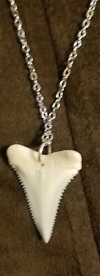 REAL Great White Shark Tooth Pendant 1in with 18in Silver Plated Chain NEW