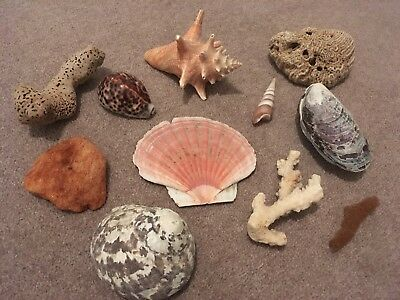 Selection Of Shells, Corals And Sponges From The Caribbean And US