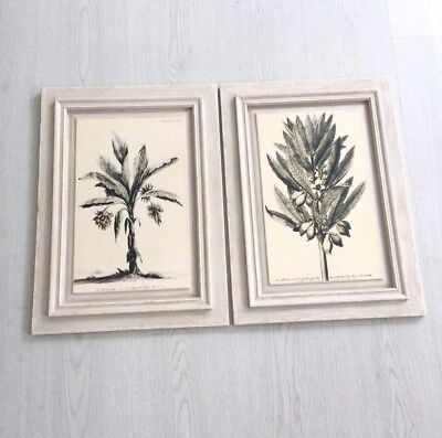 Set Of 2 Framed Art Tropical Palm Olive Tree