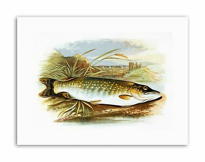 ANIMAL FISH NORTHERN PIKE LYDON Painting Canvas art Prints