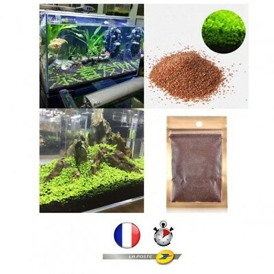 lot de 1000 graines pour aquarium decor poisson aquatique plante semence herbe