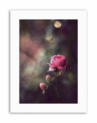 PINK ROSE FLOWER SHABBY CHIC Picture Vintage Canvas art Prints
