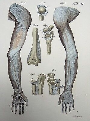 1837 J.F. Schroeter ANATOMY ORTHOPAEDICS engraving fine original hand color
