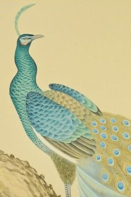 """Japanese Hanging Scroll 73.8"""" Peacock Painting Art Picture Antique Japan c077"""