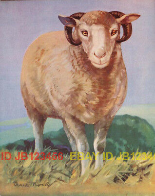 Sheep Ram, Large Vintage 70-yr-old CHILDREN's Print