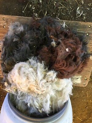 Raw Wool From 4 Huacaya Alpaca Variety Of Colours