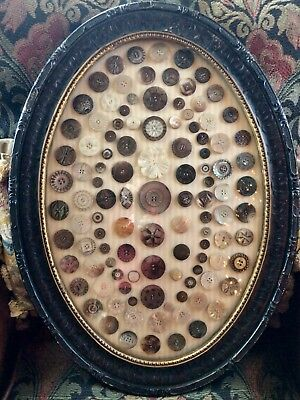 "Lot of 117+ ANTIQUE Carved MOP Shell BUTTONS in 24"" Victorian Convex Glass Frame"