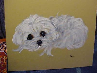 Find Your Maltese Resting On His/her Tail