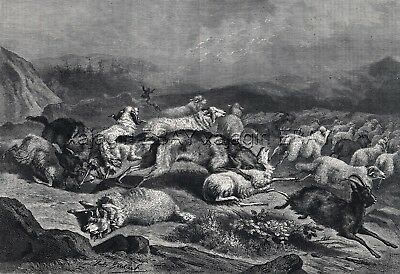 Wolf Pack Wolves Attacks Sheep & Goats, Large 1860s Antique Engraving Print