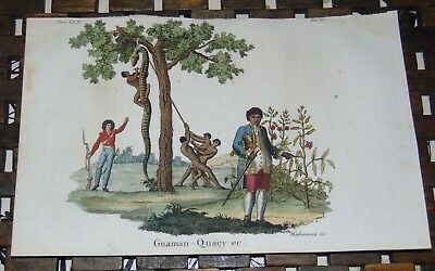 ANTIQUE Italy COPPER ENGRAVING Print 1828 HUGE SNAKE South America 59A