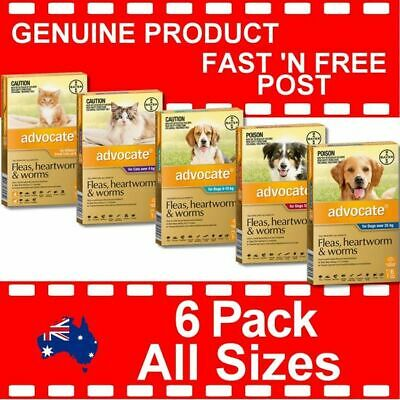 Advocate for Dogs and Cats and Kittens 6 Pack All Sizes