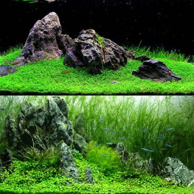 1000Pcs/Pack Fish Tank Aquarium Water Grass Seeds Aquatic Plant Foreground