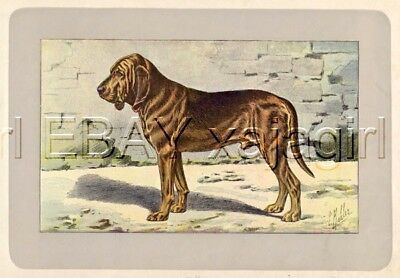 DOG Bloodhound (St Hubert Hound), Rare Antique 100-Year-Old French Dog Print