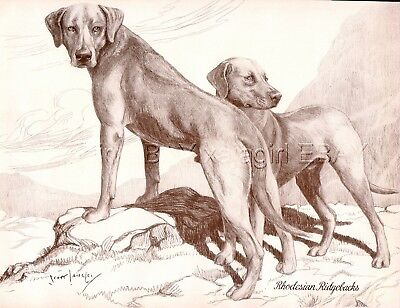 DOG Rhodesian Ridgeback Pair, Beautiful 1930s Art Print by Nina Scott-Langley