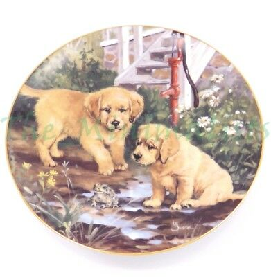 Hamilton Collection plate Friend or Foe? Golden Discoveries Retriever Puppies