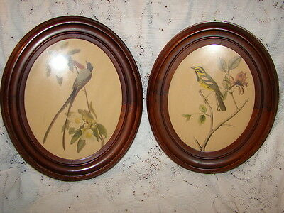 Pair of Antique Oval Mahogany Wood Frames With Birds Prints