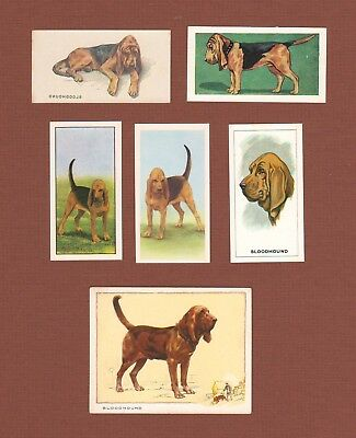 Bloodhound dog cigarette trade cards set of 6