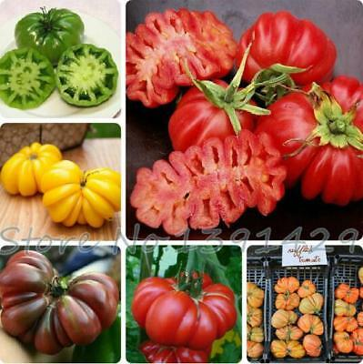 200 Pcs / bag Bonsai Tomato Seed Heirloom Non-GM Organic Fruit Vegetable