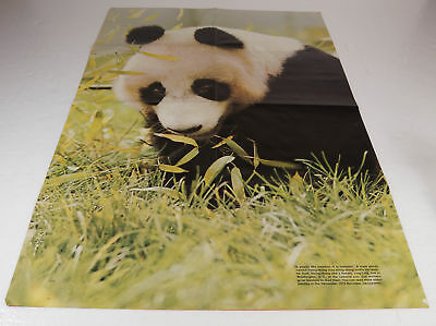 """Vintage Panda Bear Hsing-Hsing Ling-Ling poster 20.5"""" x 31"""" dated 1978"""