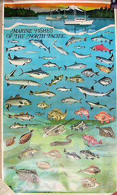 Vintage NOAA Fishery Poster Marine Fishes of the North Pacific