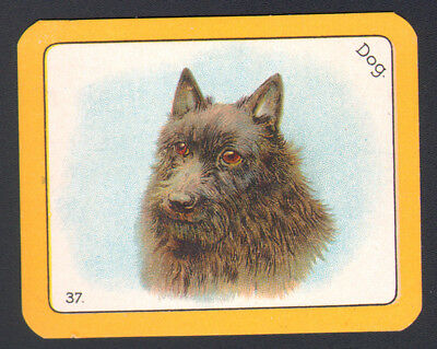 DOG Schipperke. Antique 1920s Swap Playing Card