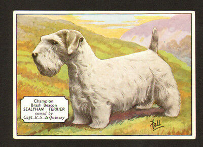 DOG Sealyham Terrier (Named) Antique 1930s Trading Card