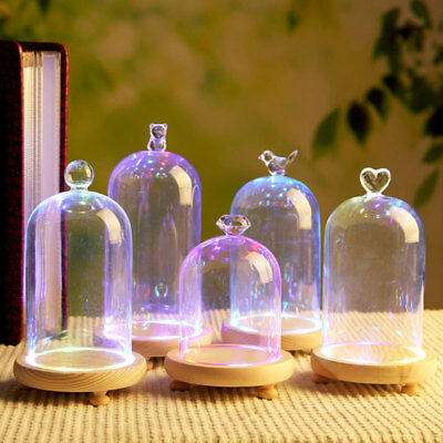 Transparent Glass Plant Flower Dome Display Bell Jar Cloche and LED Wooden Base