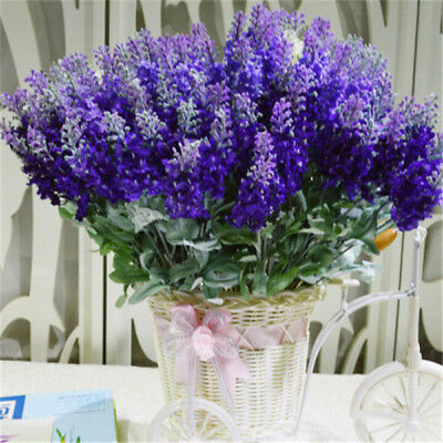 Beautiful France Lavender Seed Very Fragrant Natural Growth Garden Plant 100 Pcs