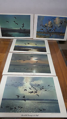 5 PIECES / 1953 PETER SCOTT DUCK PRINTS (Sealed in hard flexible plastic)