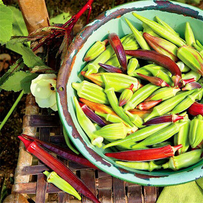 Okra Seed Non GMO Vegetable Home Supplies For Fun Countryside Garden 100 Pcs/Bag