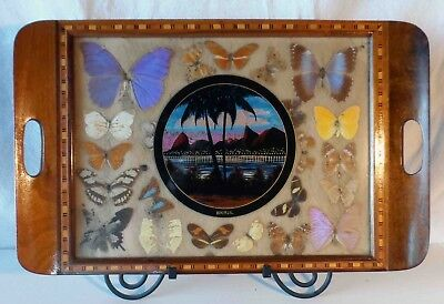 """VINTAGE BUTTERFLY WING ART INLAID WOODEN MARQUETRY TRAY Large 21""""w x 13"""" h"""