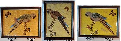 Real Butterfly Wing Decoration-set of 3 Parrots in frames