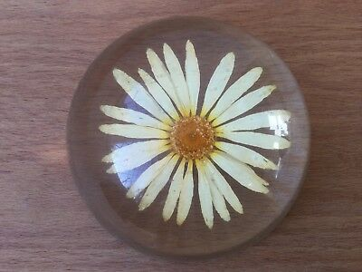 1970's Lucite Resin Paperweight Mid Century Collectable Daisy Flower Gardeners