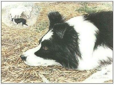 "Border Collie ""Sheep Dreams"" by Chris Lewis Brown #126/300 Signed/Nbrd Artwork"