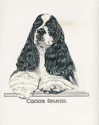 Cocker Spaniel Black/White Parti Original Art by Chris Lewis Brown - #550