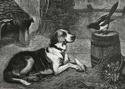 Bird Magpie Sings to Foxhound or Coonhound Dog, Large 1880s Antique Print
