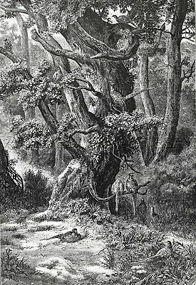 Bird Pheasants Forest of Fontainebleau, France, 1860s Antique Print & Article