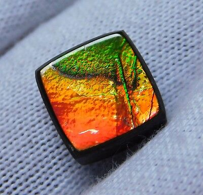 AAA Quality Natural Canadian Ammolite Cabochon Loose Gemstone